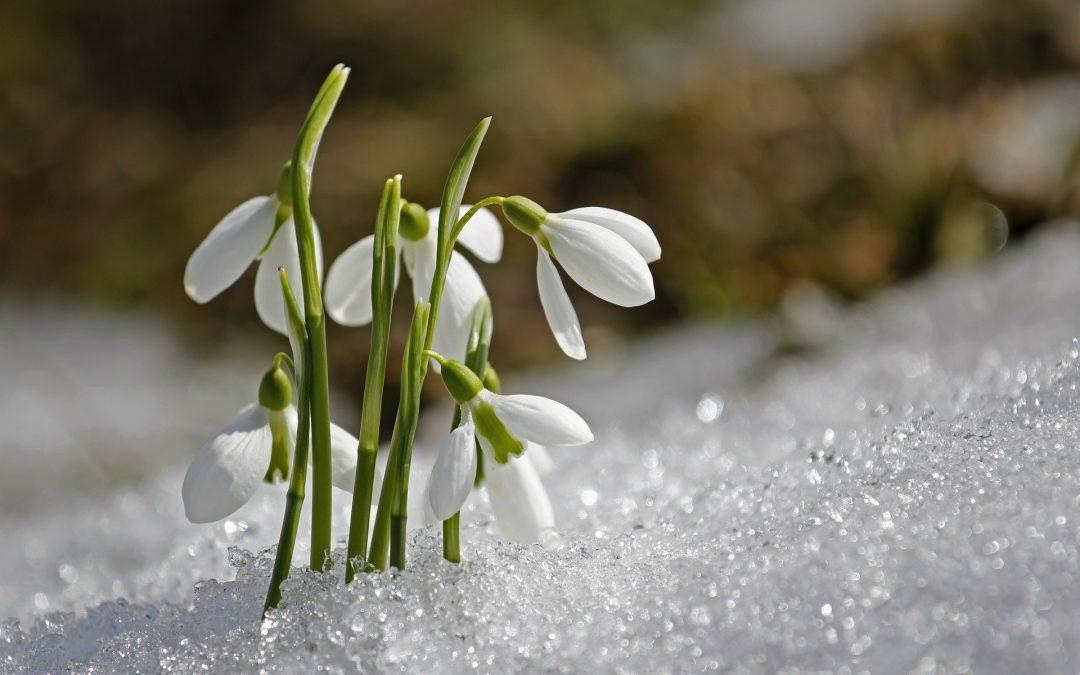 Bela pomlad